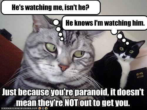 LOLCAT: He's watching me isn't he? / He knows I'm watching him