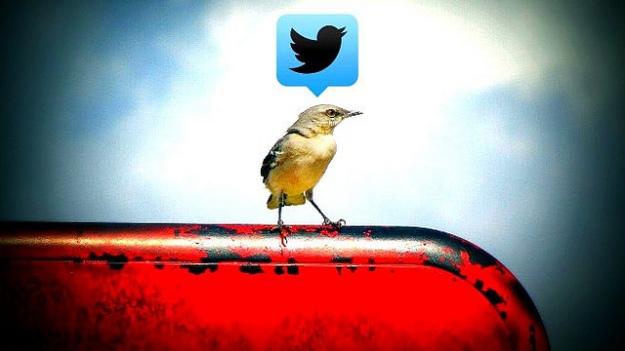 Bird on phone. image-by-uncalno-tekno