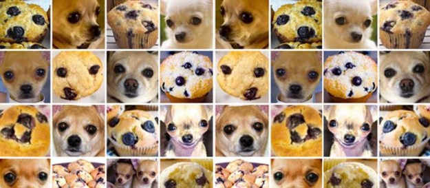 chihuahuas and muffins