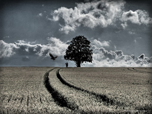 Tree and field