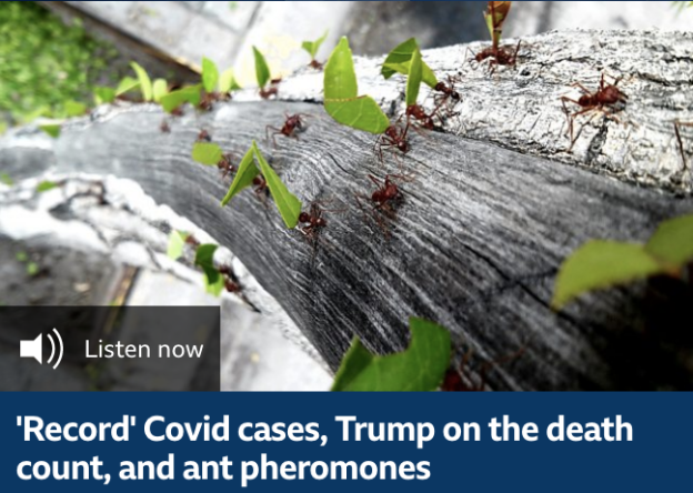 'Record' Covid cases, Trump on the death count, and ant pheromones